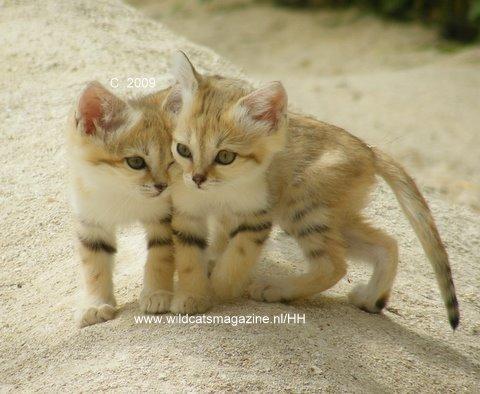 [عکس: woestijnkatjes2.JPG]